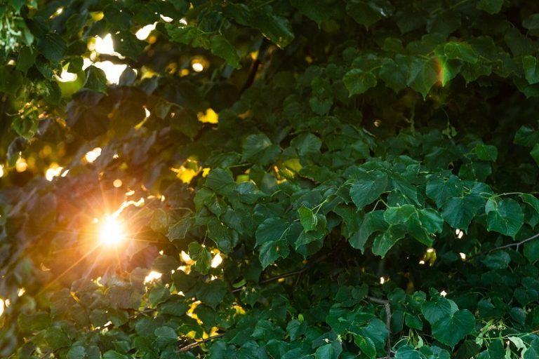 Een boom is de thermostaatknop van je tuin
