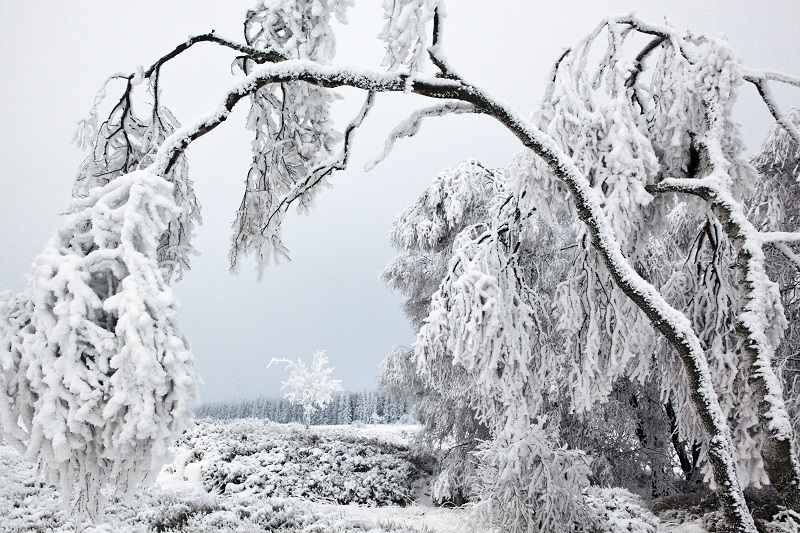 sneeuw wit
