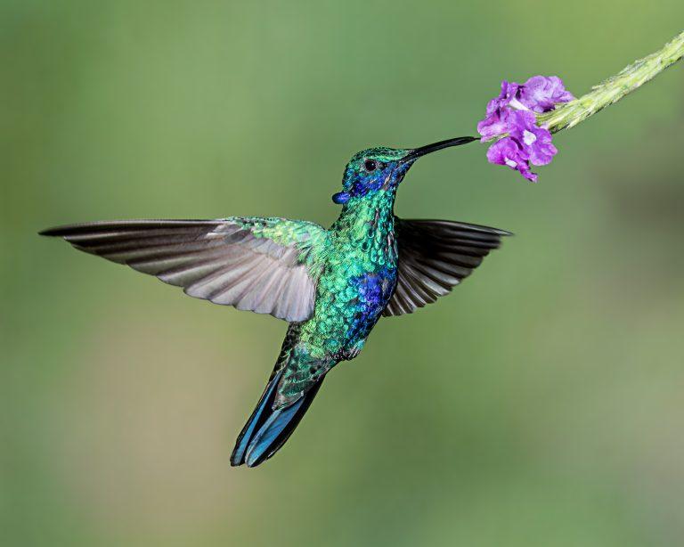 Spectaculair: deze kolibries doen ijskoude dutjes
