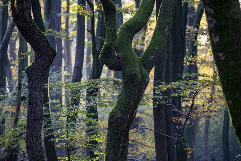 Speulderbos: wandelen door een swingend herfstbos