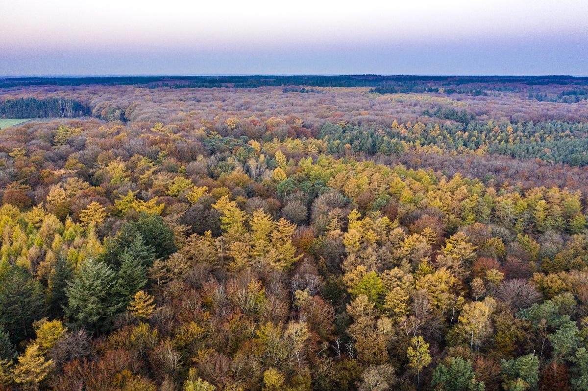 Speulderbos in herfstkleur vanuit de lucht