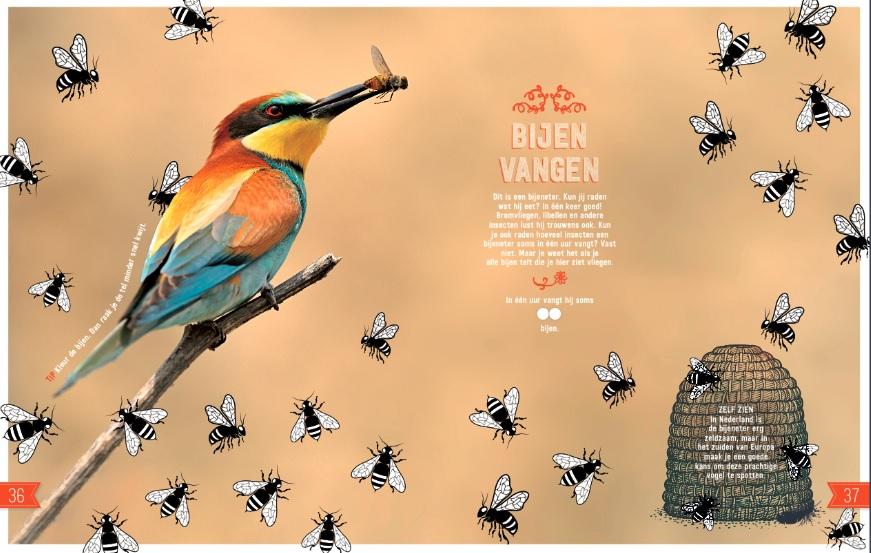 Tip Voor De Kerstvakantie Nieuwe Doe Boek Vogels Van Roots