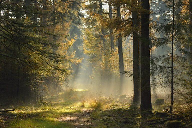 Nieuw van Roots: de 17 mooiste boswandelingen van Nederland