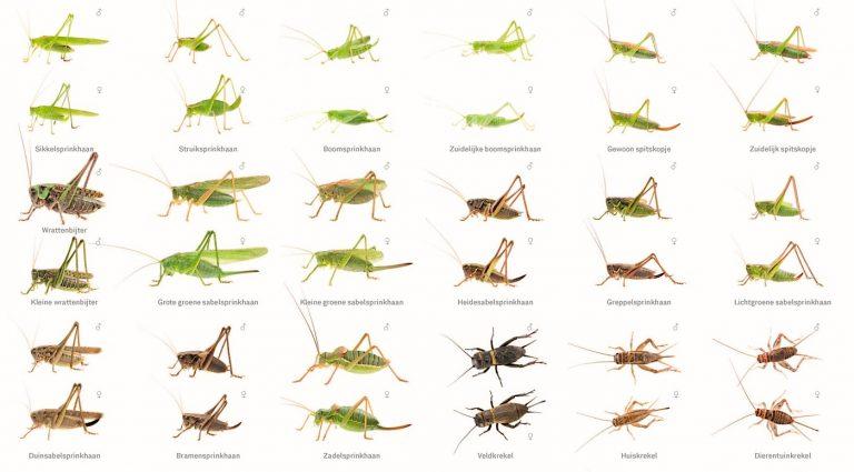 Nieuwe zoekkaart sprinkhanen en krekels