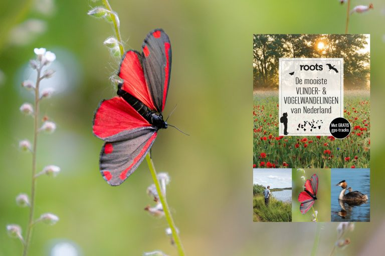 Nieuwe gids met de mooiste vlinder- en vogelwandelingen