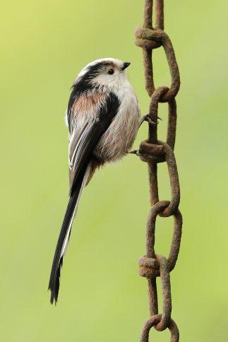 tuinvogelfoto's
