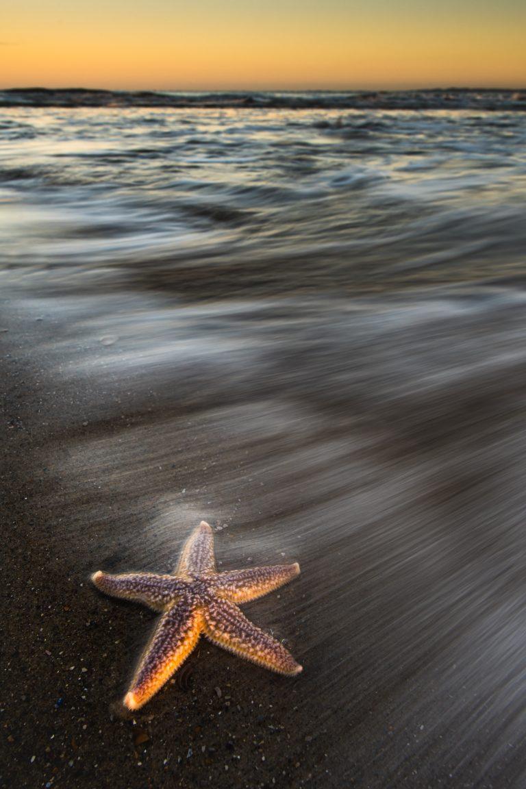 Zeesterren fotograferen in Zeeland, zo doe je dat