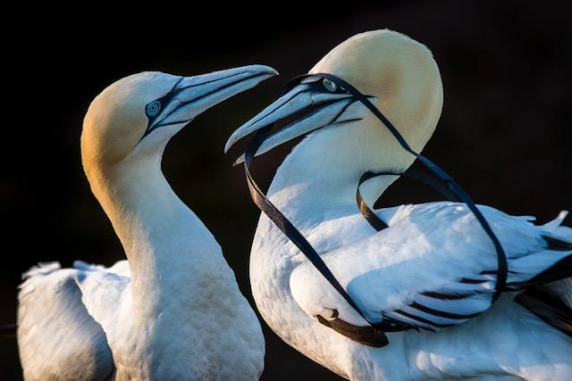 Mooie kans: 3 beurzen voor fotoprojecten over natuur