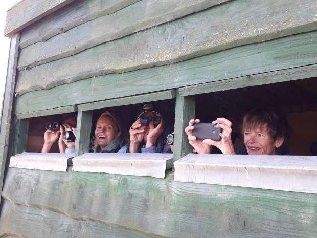 Vogelrijk Roots-weekend naar Texel