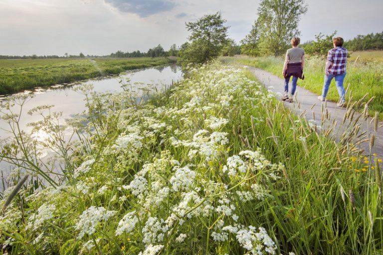 Twijzelermieden: het geheim van Friesland