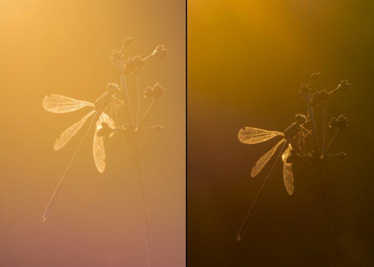 Zo maak je een creatieve libellenfoto