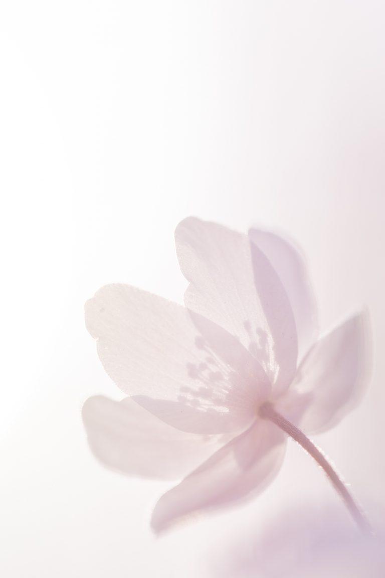 Zo fotografeer je voorjaarsbloeiers met tegenlicht
