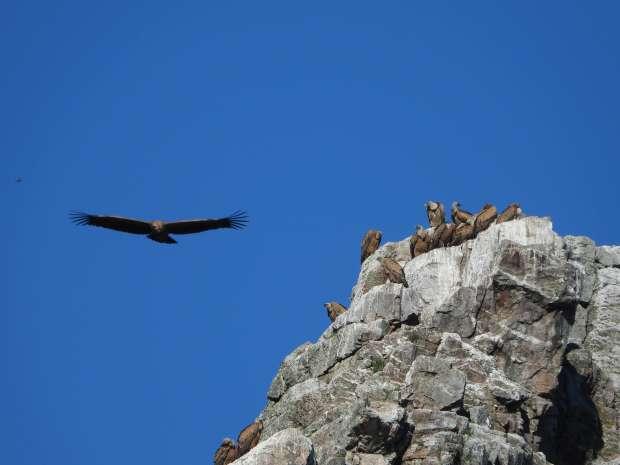 Gieren kijken in Nationaal Park Monfraqüe