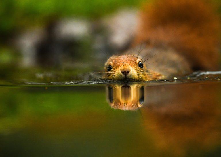 Zwemmende dieren, de 10 mooiste foto's van lezers van Roots
