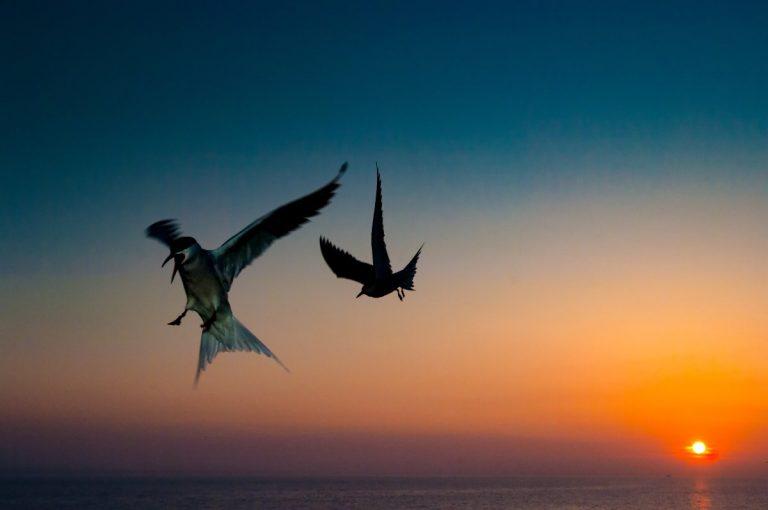 Natuurfotograferen met flitslicht, een mooie uitdaging