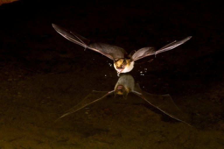 Nachtelijk vleermuisfestijn
