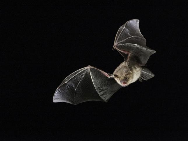 Top 5 hotspots voor vleermuizen