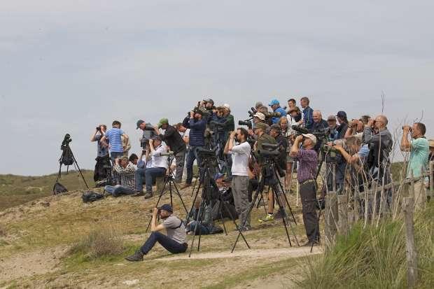 Wadden Vogelfestival op Texel