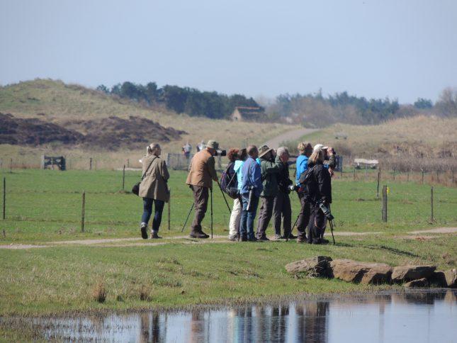 Laatste kans: Roots vogelsafari op Texel