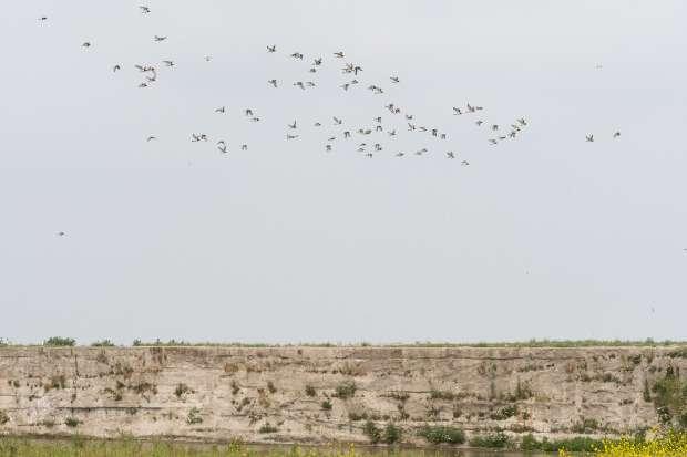 Speciale Roots lezersexcursie naar de vogelrots bij Den Helder