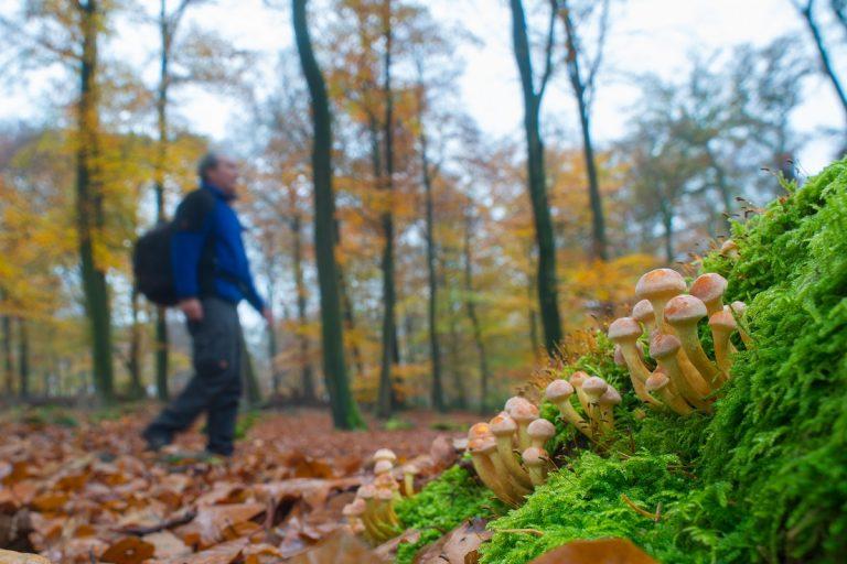 Nieuwe wandelgids van Roots: De mooiste BOSWANDELINGEN van Nederland