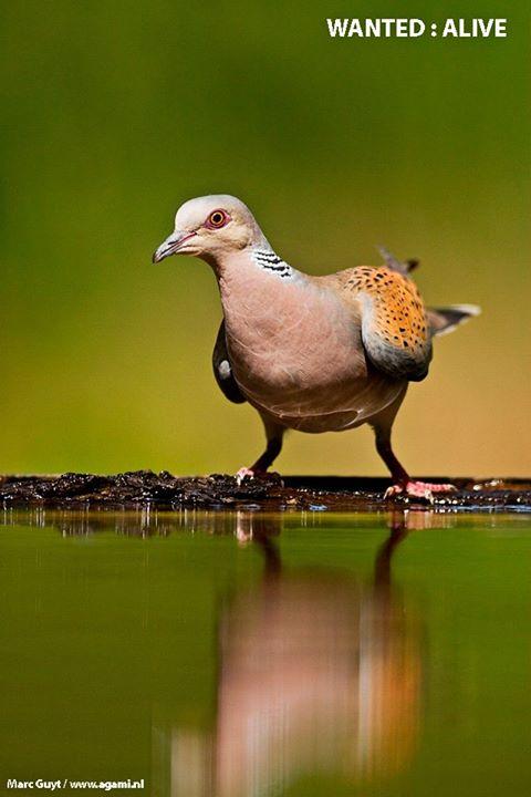 Tegen de illegale vogeljacht