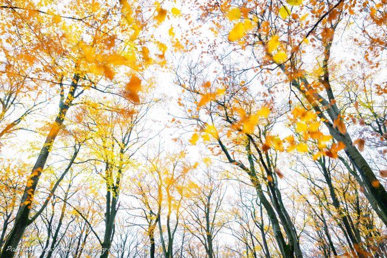Zo maak je een perfecte herfstwind-foto