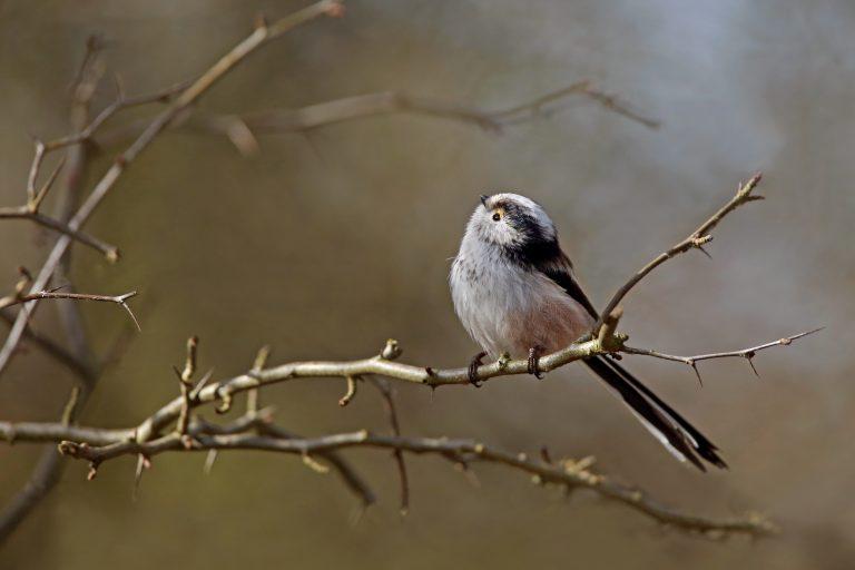 De nationale tuinvogeltelling op 27 en 28 januari