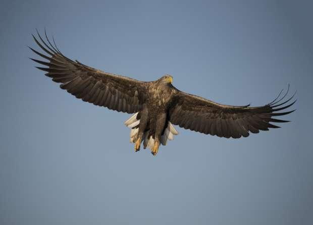 Kom naar het Roots Vogelfestival in de Biesbosch!