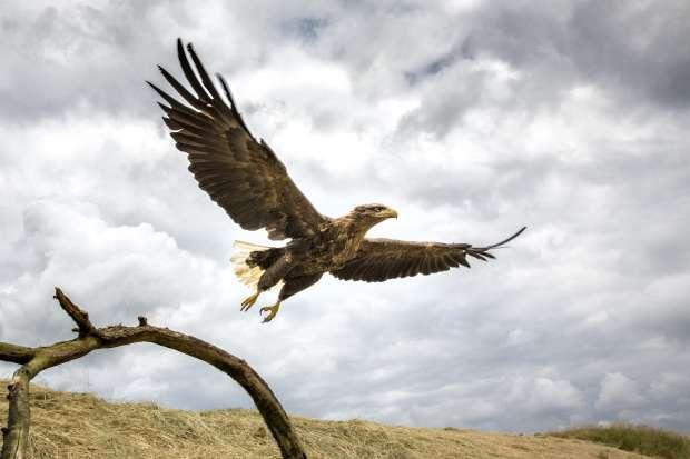 Vogelhotspot en Dark Sky Park Lauwersmeer