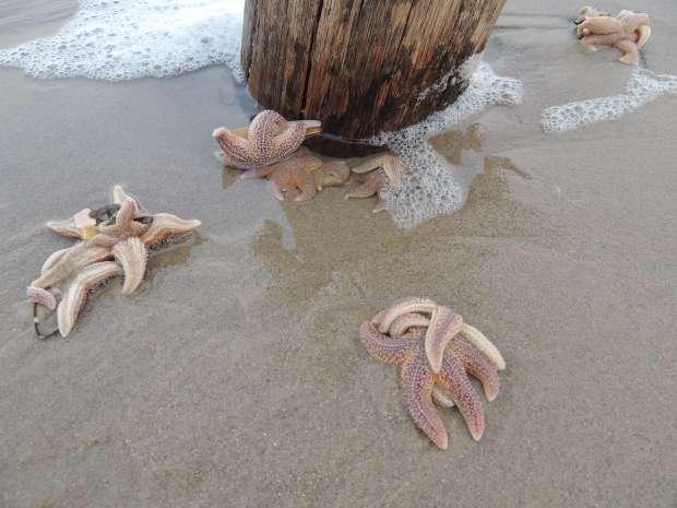 Oostenwind brengt schelpen