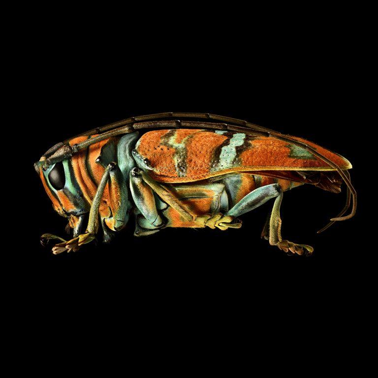 Microsculpture: Megagrote insecten in Natuurhistorisch Museum