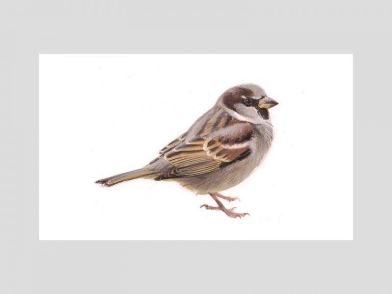 De Nationale Tuinvogeltelling 2015 op 17 en 18 januari