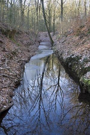 Veluwse beek, ook in de winter fascinerend om naar te kijken.