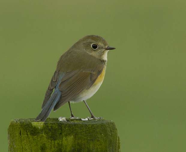 Dutch Birding Vogelweekend