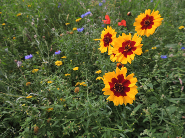 Onverwachte bloemenzee
