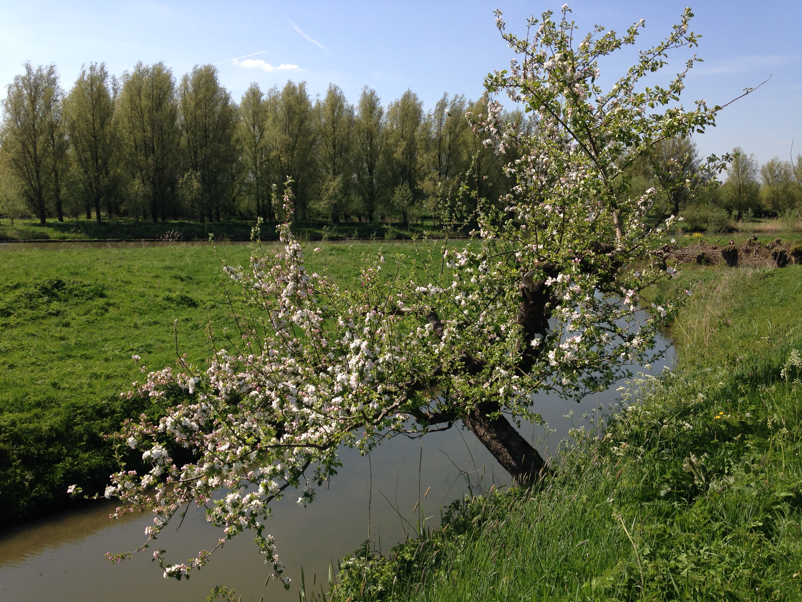 Zeker in de lente is de Betuwe één van de mooiste plekjes van Nederland