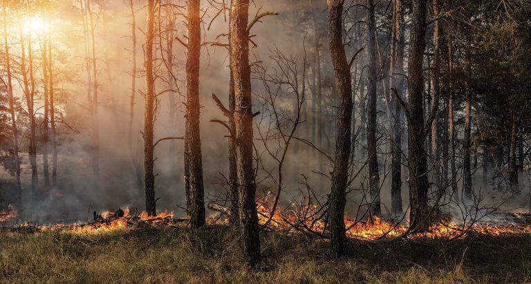 Natuurbranden in Nederland: gevaarlijk of goed voor de natuur?