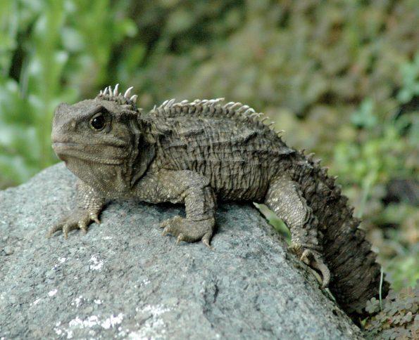 10 oudste dieren: brughagedis