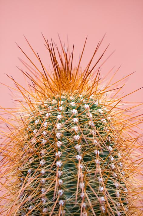 Cactus hortus_01_web