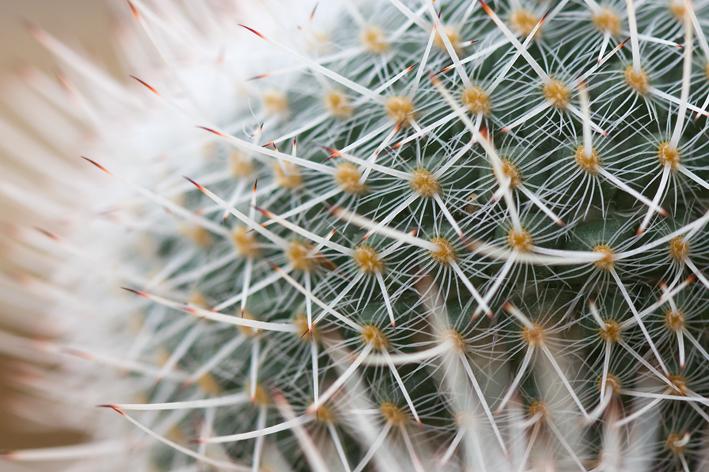 Cactus hortus_web
