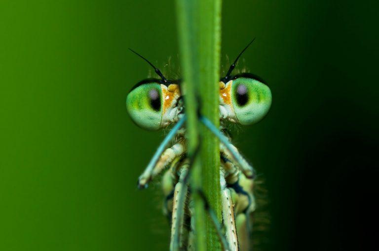Met de libellen gaat het niet zo slecht