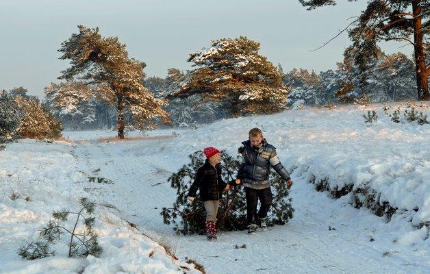 Je eigen kerstboom zagen op De Hoge Veluwe!