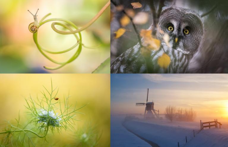 De Roots Natuurfotowedstrijd 2019 is gestart!