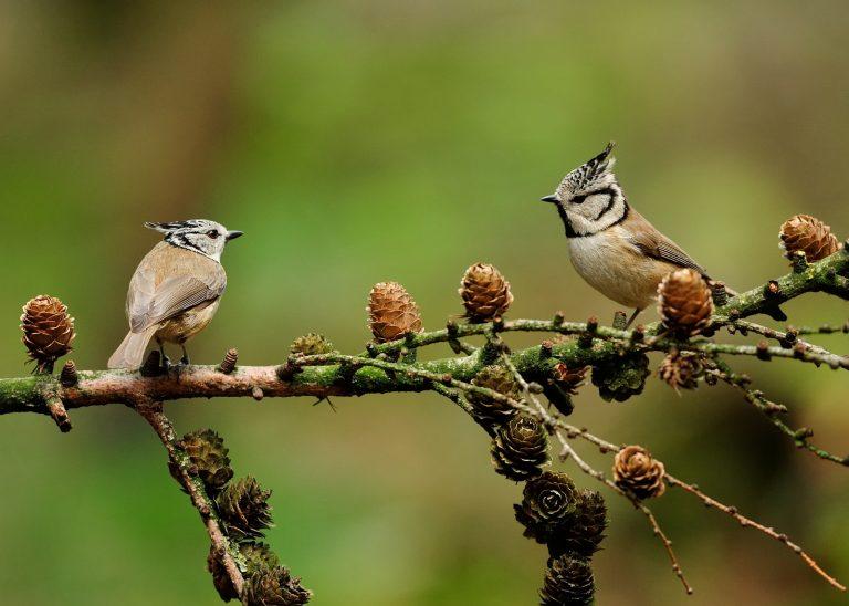 Even bezinnen: waarom vogels kijken gelukkig maakt