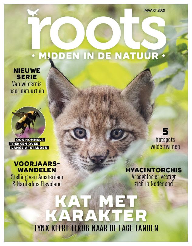 digi-ROOTS-COVER-3-mrt