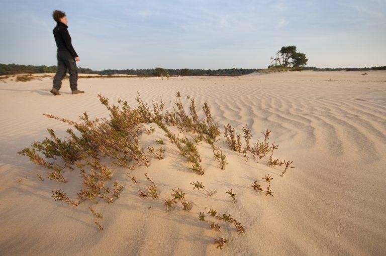 Dit zijn de 10 mooiste zandverstuivingen in Nederland