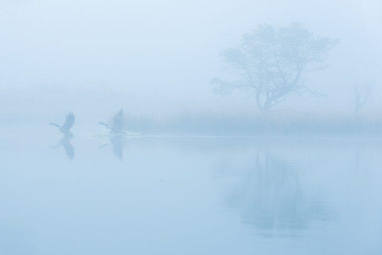 Hoongelach in de mist