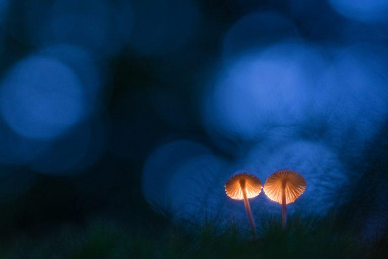 Mini masterclass paddenstoelen fotograferen van Edwin Giesbers