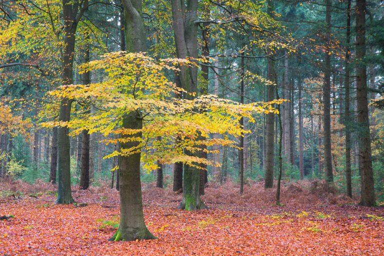 Een bos in de tuin